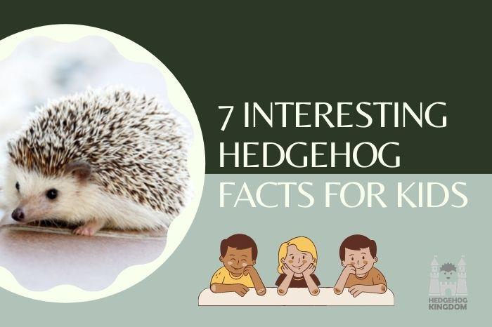 hedgehog and kids