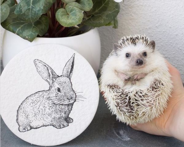 hedgehog and rabbit