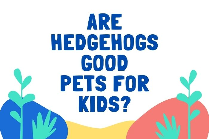 Are Hedgehogs Good Pets For Kids poster