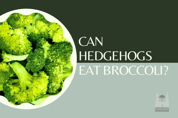 Can Hedgehogs Eat Broccoli