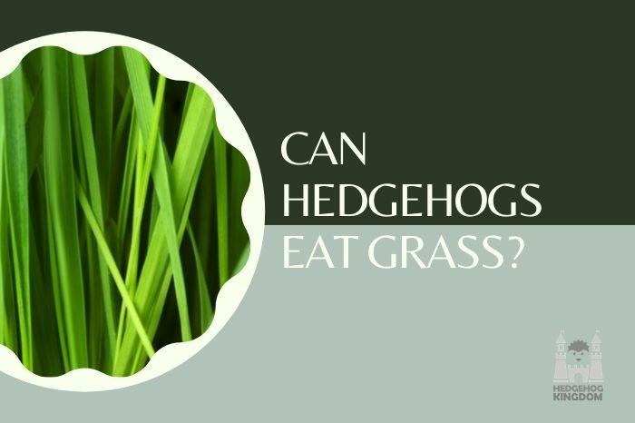 green big grass