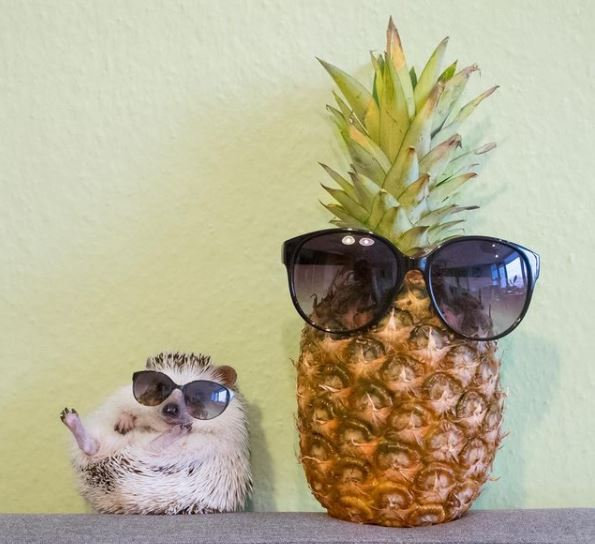 hedgehog with pineapple