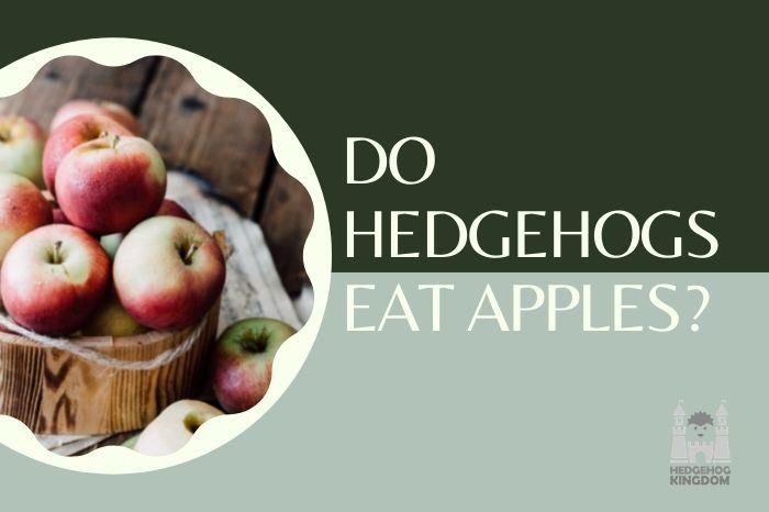 Do Hedgehogs Eat Apples
