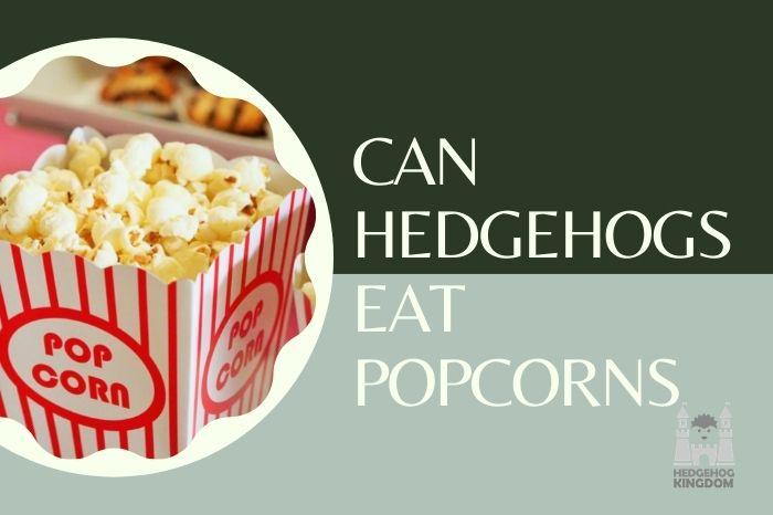 popcorns and hedgehogs
