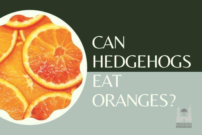 Do hedgehogs eat oranges?