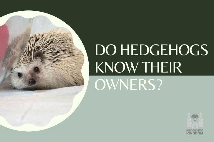 hedgehog staring