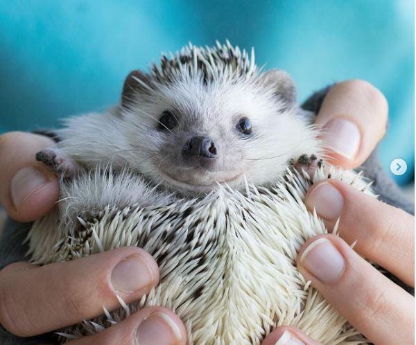 helding hedgehog