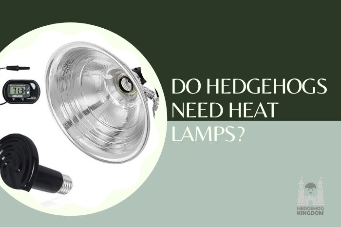 heating lamps for hedgehogs