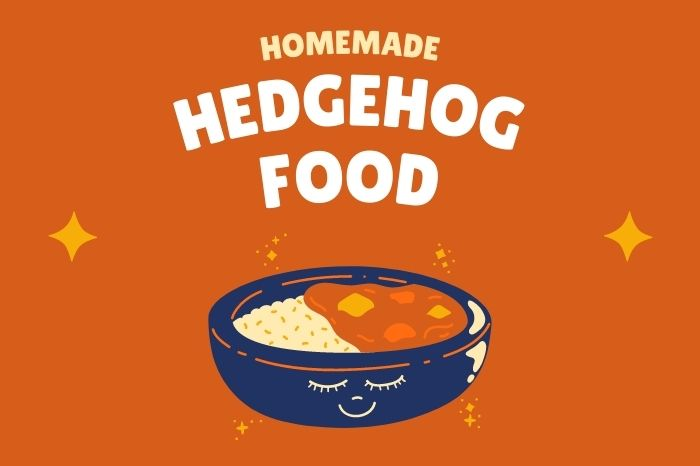 homemade hedgehog food and what to avoid